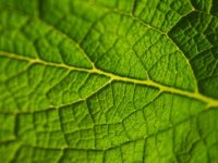 Sistemas de Gestión Ambiental según ISO 14001